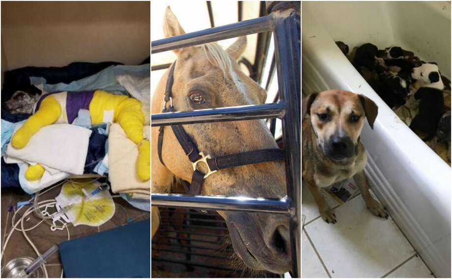 Animal abuse cases in 2017Houston and the rest of Texas saw a shocking amount of animal abuse cases this year. Scroll through the gallery ahead to see which animal abuse cases shocked Texans this year.