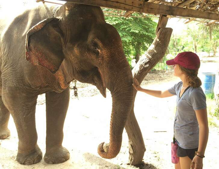 Zoe Damaschino of Danville feeds an elderly elephant in Thailand during a recent family vacation. Zoe's family spent a day helping out at an elephant sanctuary.