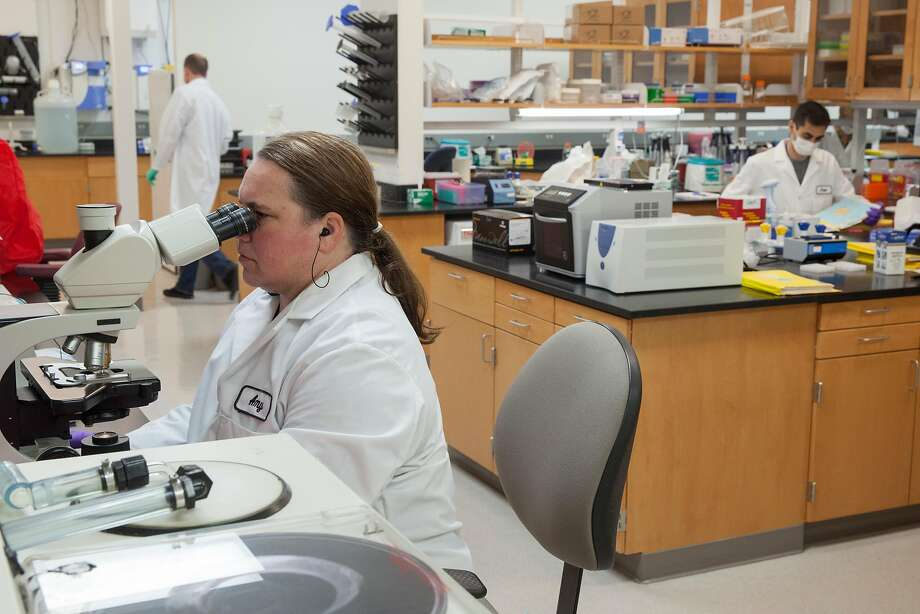 A technician with the California Department of Justice Bureau of Forensic Services examines possible DNA evidence in the Case Work Extraction Lab at the State DNA Laboratory in Richmond. Photo: Peter DaSilva, Special To The Chronicle