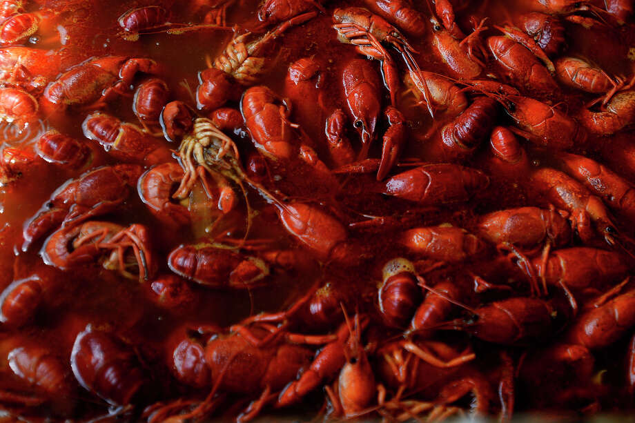 Crawfish boil in seasoned water at Pura Vida Farms Crawfish at 9452 FM 365 in Labelle.  Photo taken Friday 3/18/16 Ryan Pelham/The Enterprise Photo: Ryan Pelham / ©2016 The Beaumont Enterprise/Ryan Pelham