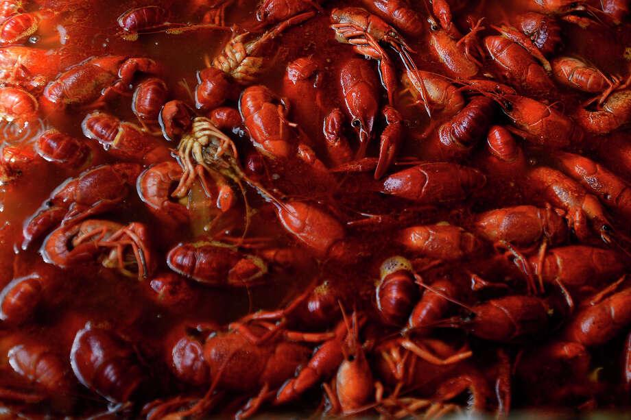 Crawfish boil in seasoned water at Pura Vida Farms Crawfish at 9452 FM 365 in Labelle.  Photo taken Friday 3/18/16 Ryan Pelham/The Enterprise Photo: Ryan Pelham / ©2016 The Beaumont Enterprise/Ryan Pelham