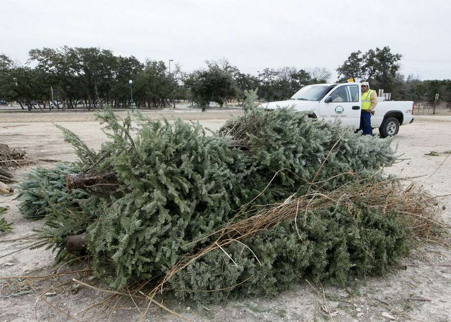 Cromwell Public Works officials are asking people to bring their discarded Christmas trees to the curb for pickup beginning Jan. 3. Photo: File Photo / Prime Time Newspapers 2014