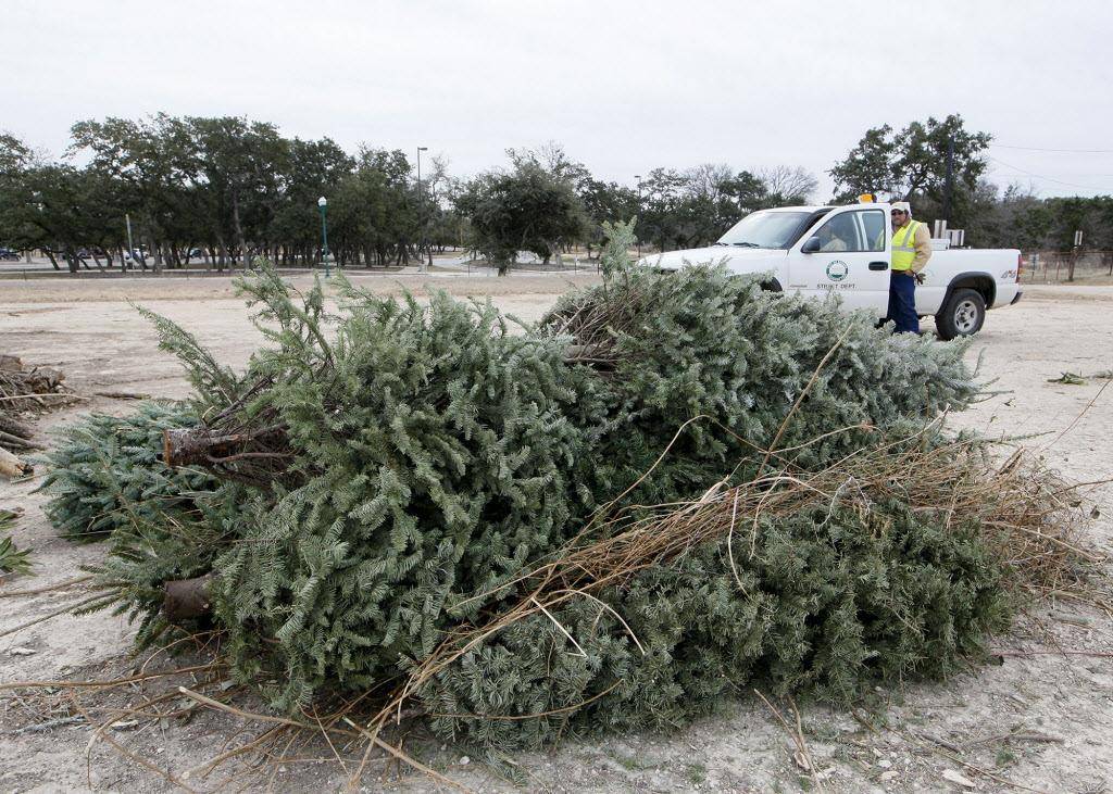 christmas tree pickup to begin jan 3 in cromwell san On christmas tree pick up san antonio
