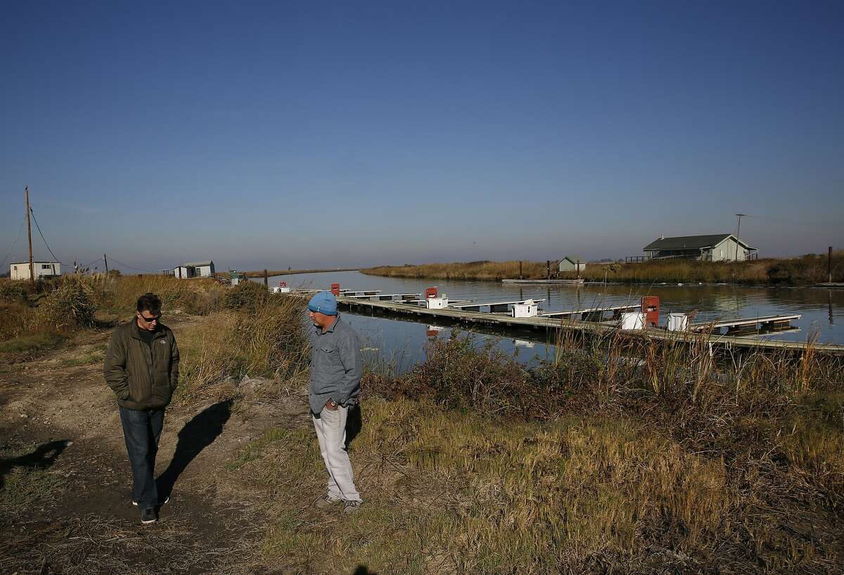 Co-owners of Chipps Island, John Sweeney, right, and Curt Setzer walk along its docks during a tour for the Chronicle of Chipps Island Nov. 13, 2015 near Pittsburg, Calif. Chipps, which is part of the Suisun Marsh is used for habitat for wintering and migrating waterfowl and for duck hunting.