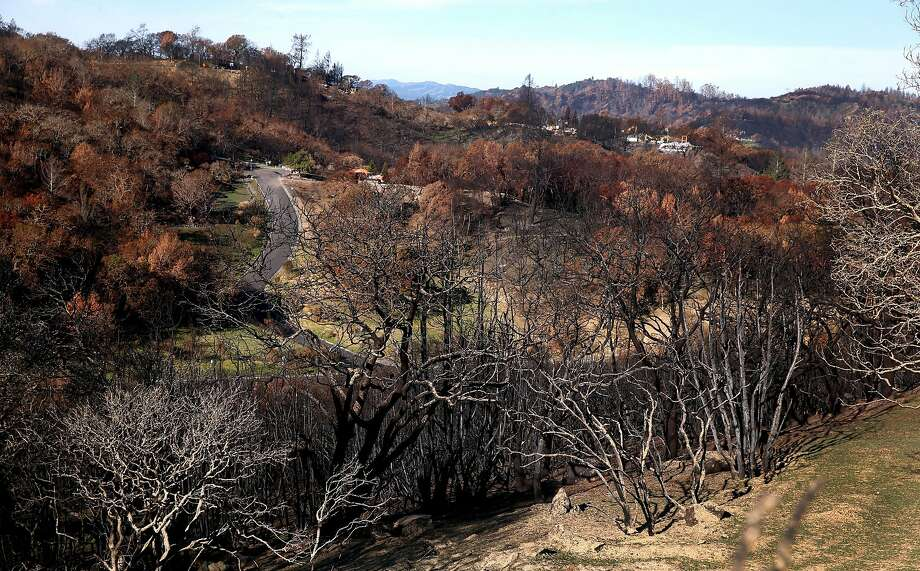 The Tubbs Fire in Sonoma County scorched hills so severely that trees could come back more slowly, a forest ecologist says. Photo: Paul Chinn, The Chronicle