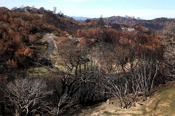 Vegetation burned by the Tubbs Fire on the hills of the Fountaingrove neighborhood are seen in Santa Rosa, Calif. on Thursday, Dec. 28, 2017.