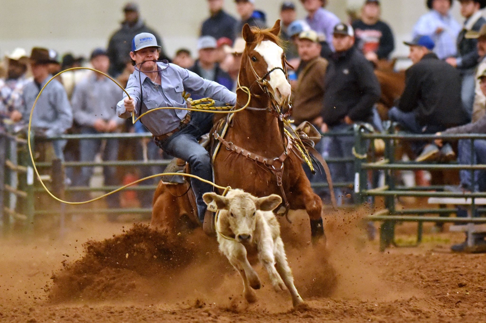 Tall City Ultimate New Year S Eve Jr Calf Roping