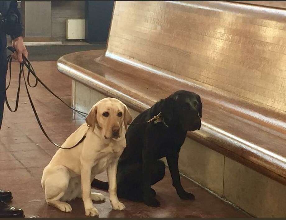 The Connecticut State Police tweeted Sunday night that they and a couple doggie friends will be patrolling the trains. Photo courtesy of the Connecticut State Police. Photo: Contributed / Contributed
