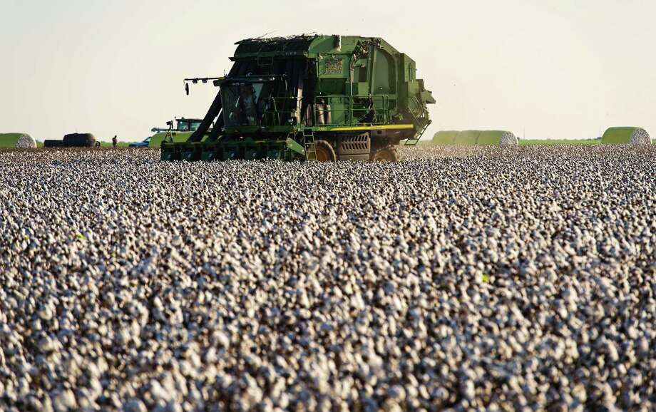 A worker operates a cotton picker at a farm in the Nueces County of Chapman Ranch, Texas, on Aug. 23, 2016. Photo: Bloomberg Photo By Eddie Seal. / © 2017 Bloomberg Finance LP