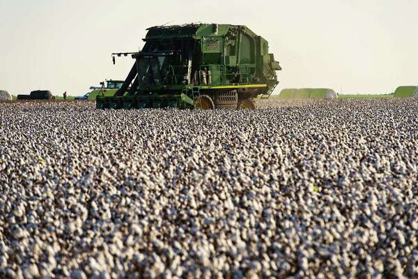 A worker operates a cotton picker at a farm in the Nueces County of Chapman Ranch, Texas, on Aug. 23, 2016.