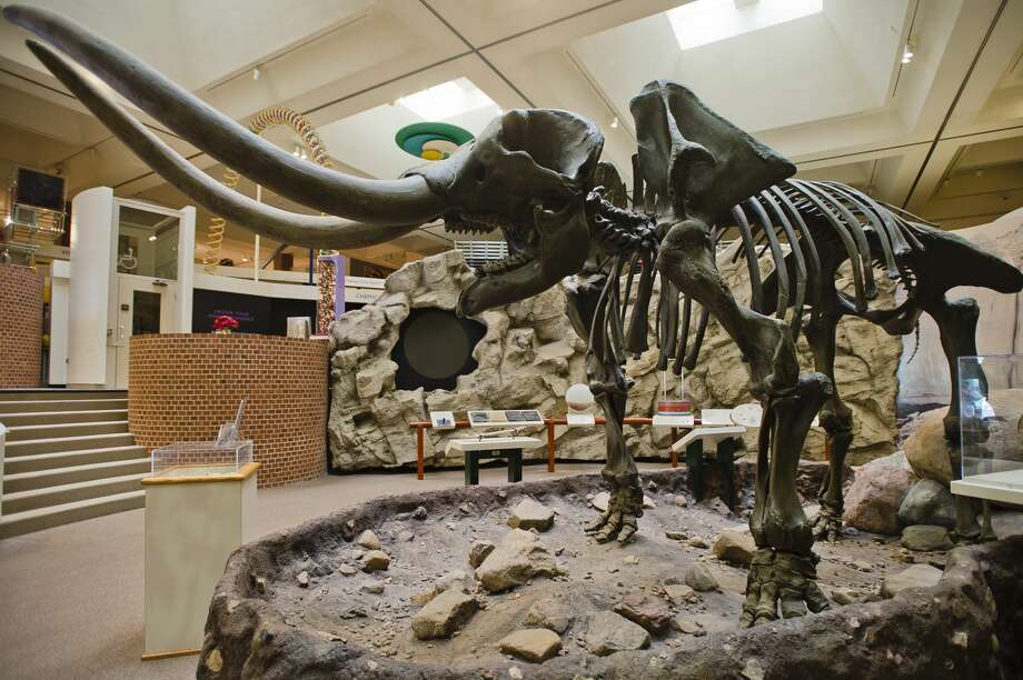 """The Alden B. Dow Museum of Science and Art will bid farewell this week to their beloved mastodon skeleton, nicknamed """"Manny,"""" as it will be restored and will move to a new home at the Herbert D. Doan Midland County History Center. (Katy Kildee/kkildee@mdn.net) Photo: (Katy Kildee/kkildee@mdn.net)"""