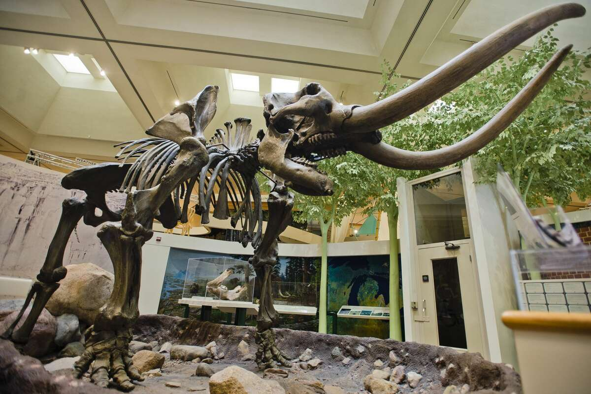 The Alden B. Dow Museum of Science and Art will bid farewell this week to their beloved mastodon skeleton, nicknamed