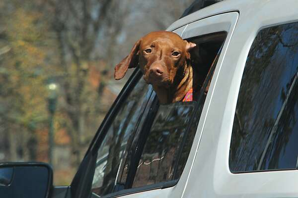 A dog enjoys the warmer weather by sticking his head out a car window on Friday, April 15, 2016 in Schenectady, N.Y. (Lori Van Buren / Times Union)