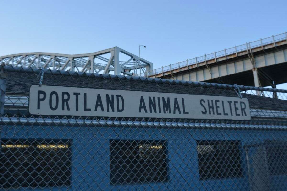 Portland and Middletown animal control offices share a shelter underneath the Arrigoni Bridge in Portland, near the Connecticut River.