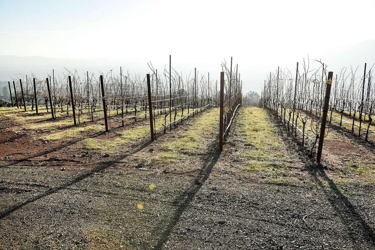 Cabernet Sauvignon vines grow at Gilfillan Vineyard, owned by Lambert Bridge Winery, in Glen Ellen, Calif., on Monday December 18, 2017.