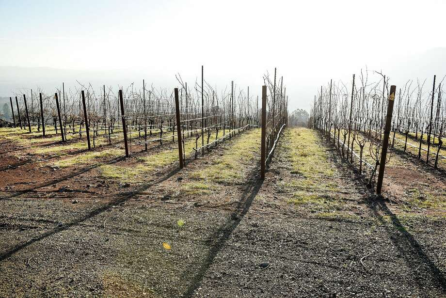Cabernet Sauvignon vines at Gilfillan Vineyard, owned by Lambert Bridge Winery, in Glen Ellen. Photo: Michael Short, Special To The Chronicle