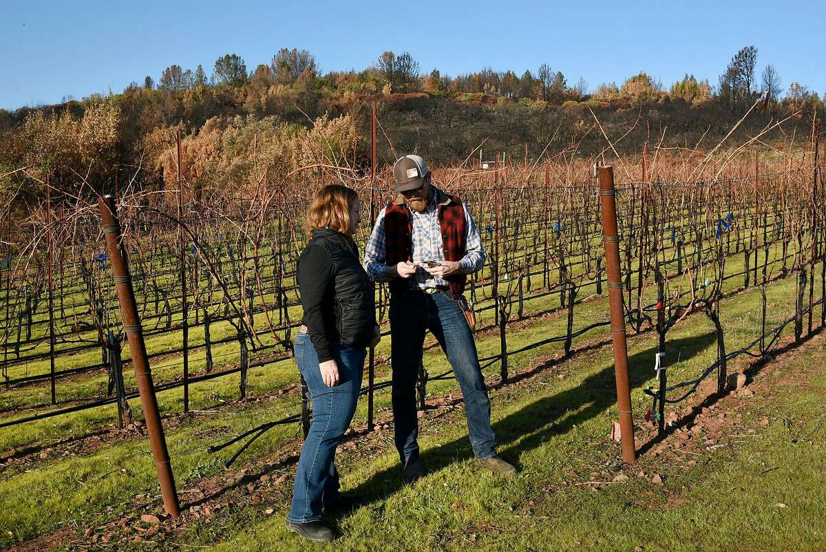 Fire damage is visible on the hill behind Lambert Bridge winemaker Jennifer Higgins and vineyard manager Scott Knippelmeir as they inspect Cabernet Sauvignon vines for smoke and fire damage at Gilfillan Vineyard, owned by Lambert Bridge Winery, in Glen Ellen, Calif., on Monday December 18, 2017.