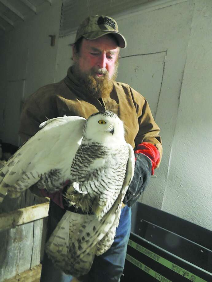 Joe Rogers with a snowy owl. (Wildlife Recovery Association photo) Photo: (Wildlife Recovery Association Photo)