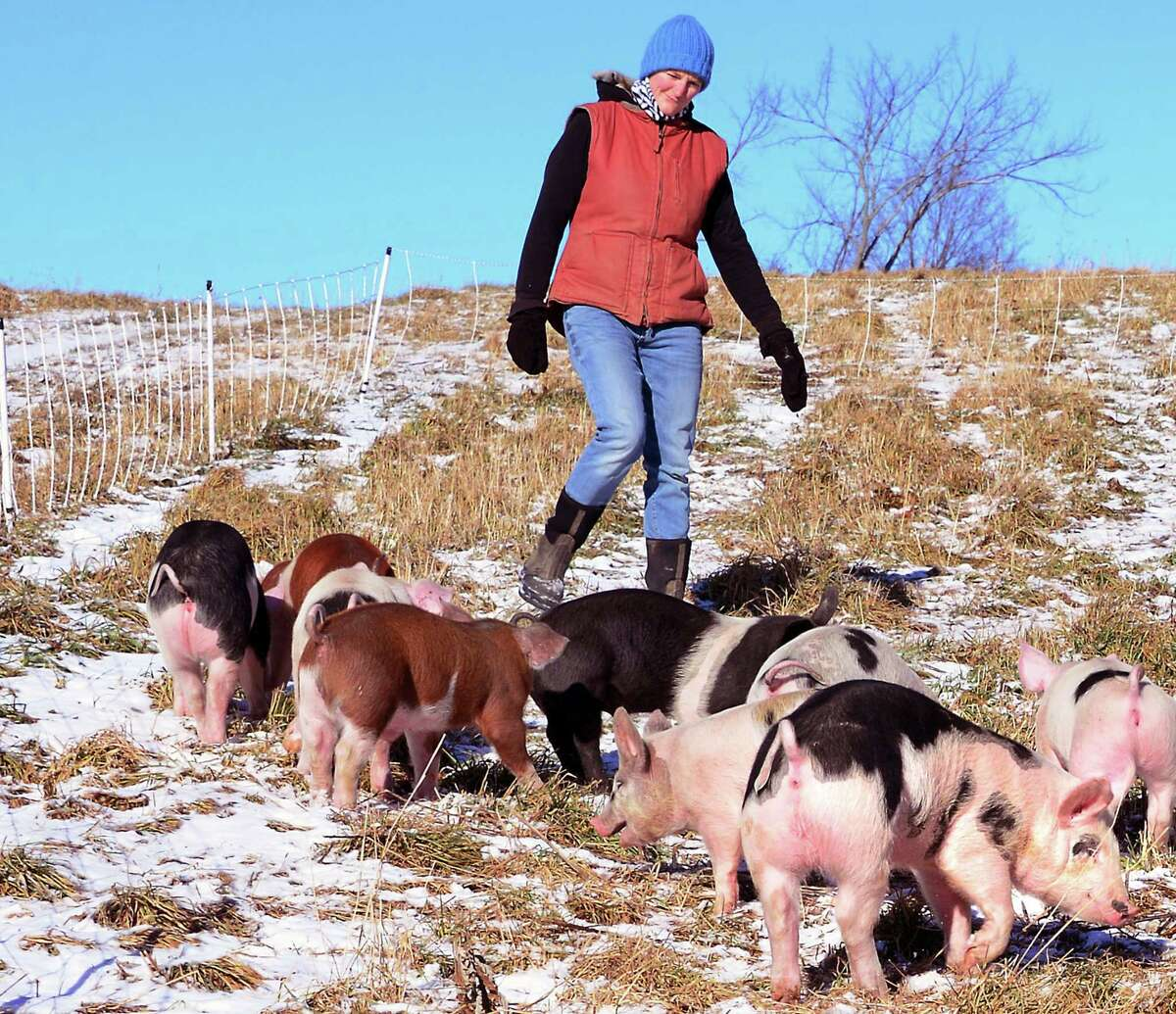 Annie Metzger with some of her pastured pigs on her Laughing Earth Farm Thursday Dec. 14, 2017 in Cropseyville, NY. (John Carl D'Annibale / Times Union)