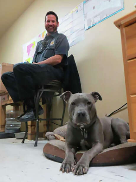 Nelson, recently retired as canine ambassador for Kerr County, sits on his pillow in the county shelter as Animal Control Officer Mike Wong looks on. / San Antonio Express-News
