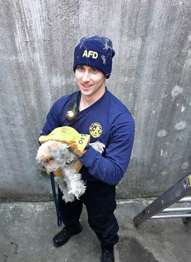Photos Austin Firefighters Rescue Trapped Dog San Antonio Express