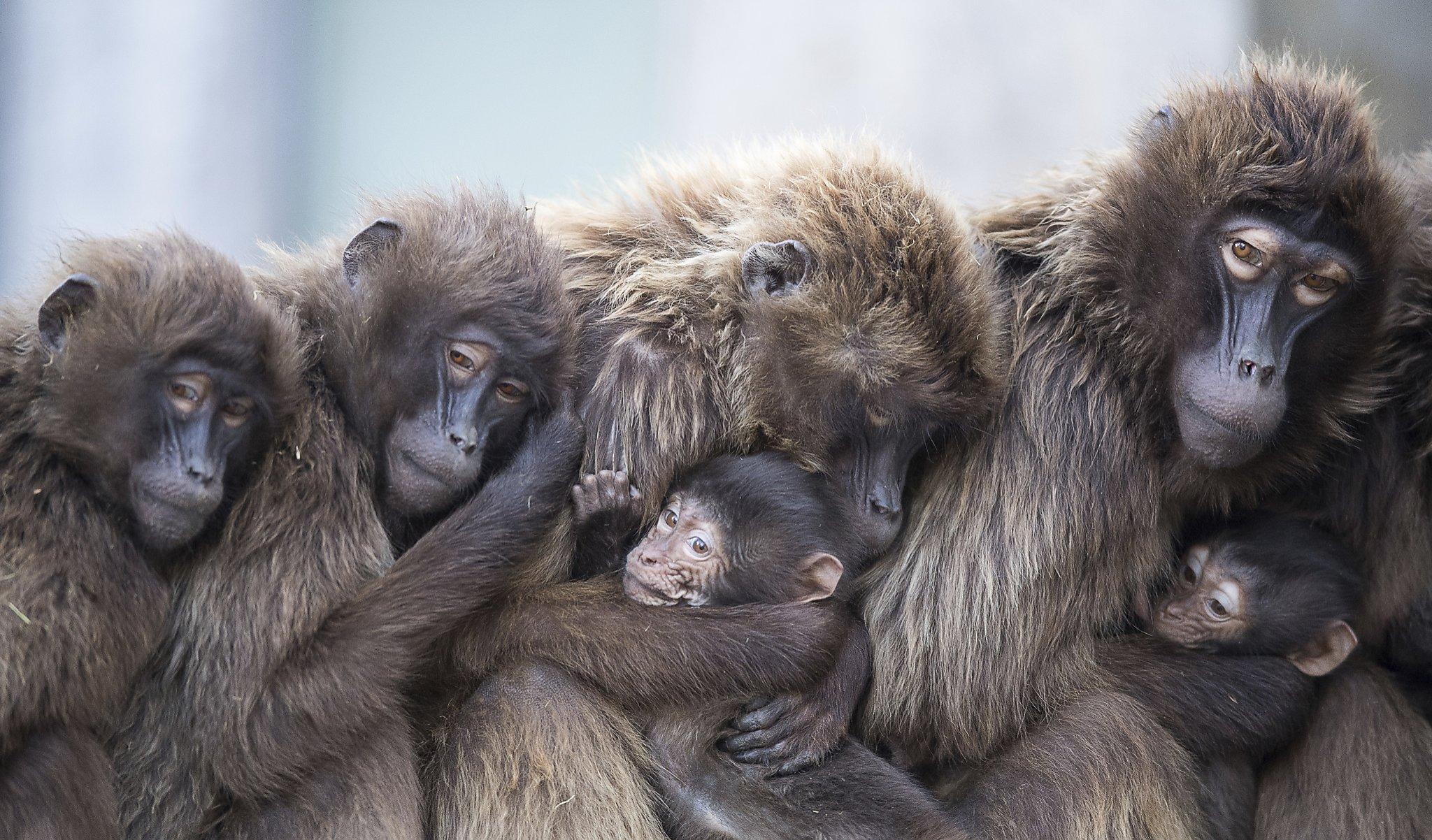 'I shot a whole family of baboons': Idaho Fish and Game