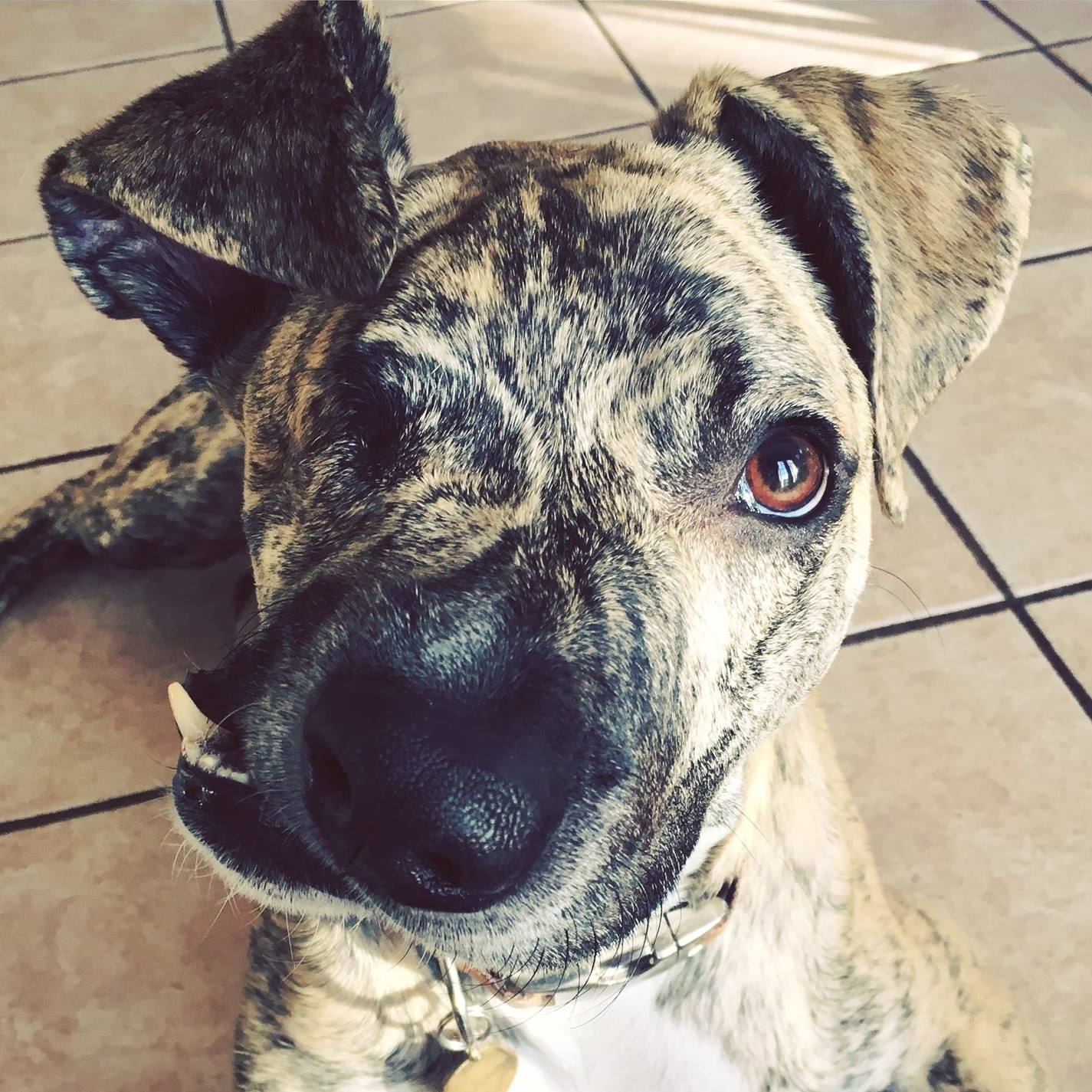 San Antonio BMW >> S.A. rescue dog inspires with one eye and a semicolon face - Houston Chronicle