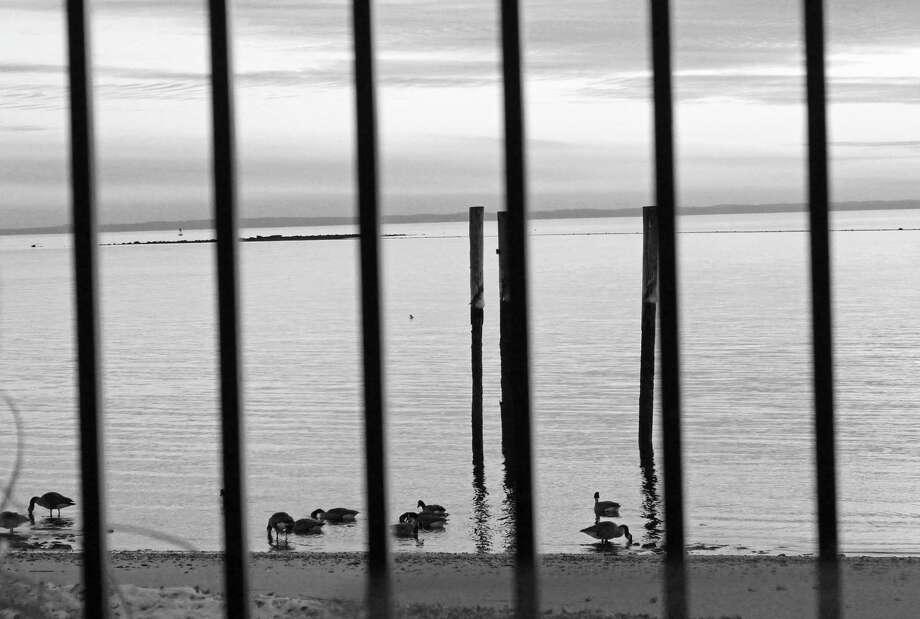 Ducks gather along the shoreline at sunset. Photo: Genevieve Reilly / Hearst Connecticut Media / Fairfield Citizen