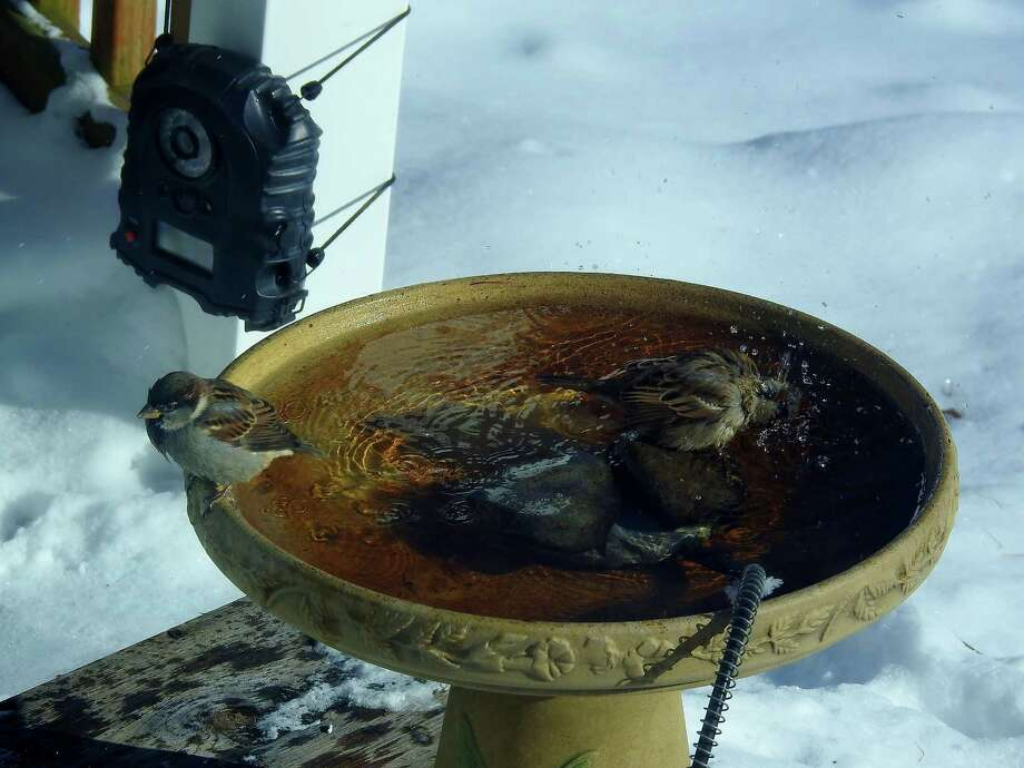 """This """"2018 Polar BIRD Plunge"""" was caught by Michele Heaton of Troy. """"Installing a heated bird bath in the backyard for winter is a great idea for bird watching and fun and healthy for the birds as well,"""" Heaton says."""