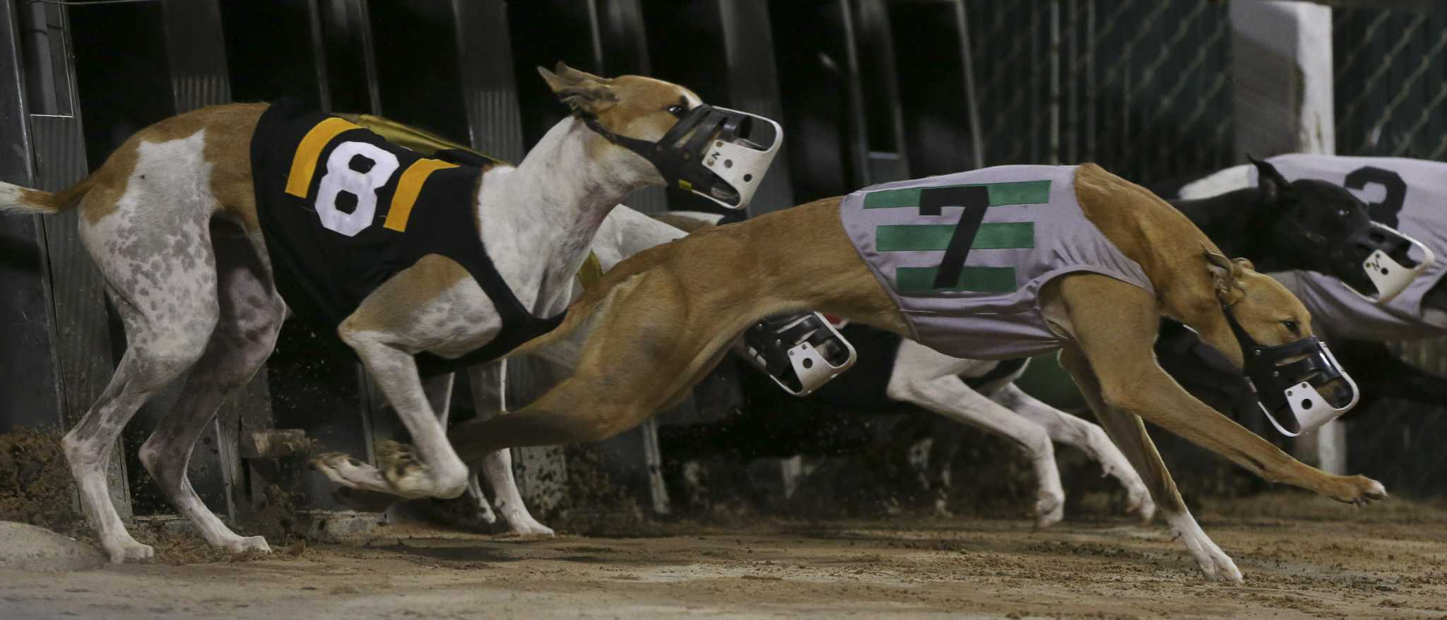 Dog racing betting rules of texas mixed sport parlay betting