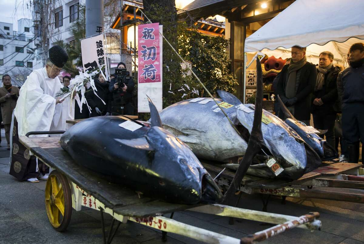 TOKYO, JAPAN - JANUARY 05: A Shinto priest holds a traditional ceremony for the highest priced fresh bluefin tuna auctioned from the year's first auction at Tsukiji Market on January 5, 2018 in Tokyo, Japan. Yamayuki Group bid the highest priced tuna weighing 405 kilogram for 36.45 million yen ($322,983) at the auction. (Photo by Tomohiro Ohsumi/Getty Images)