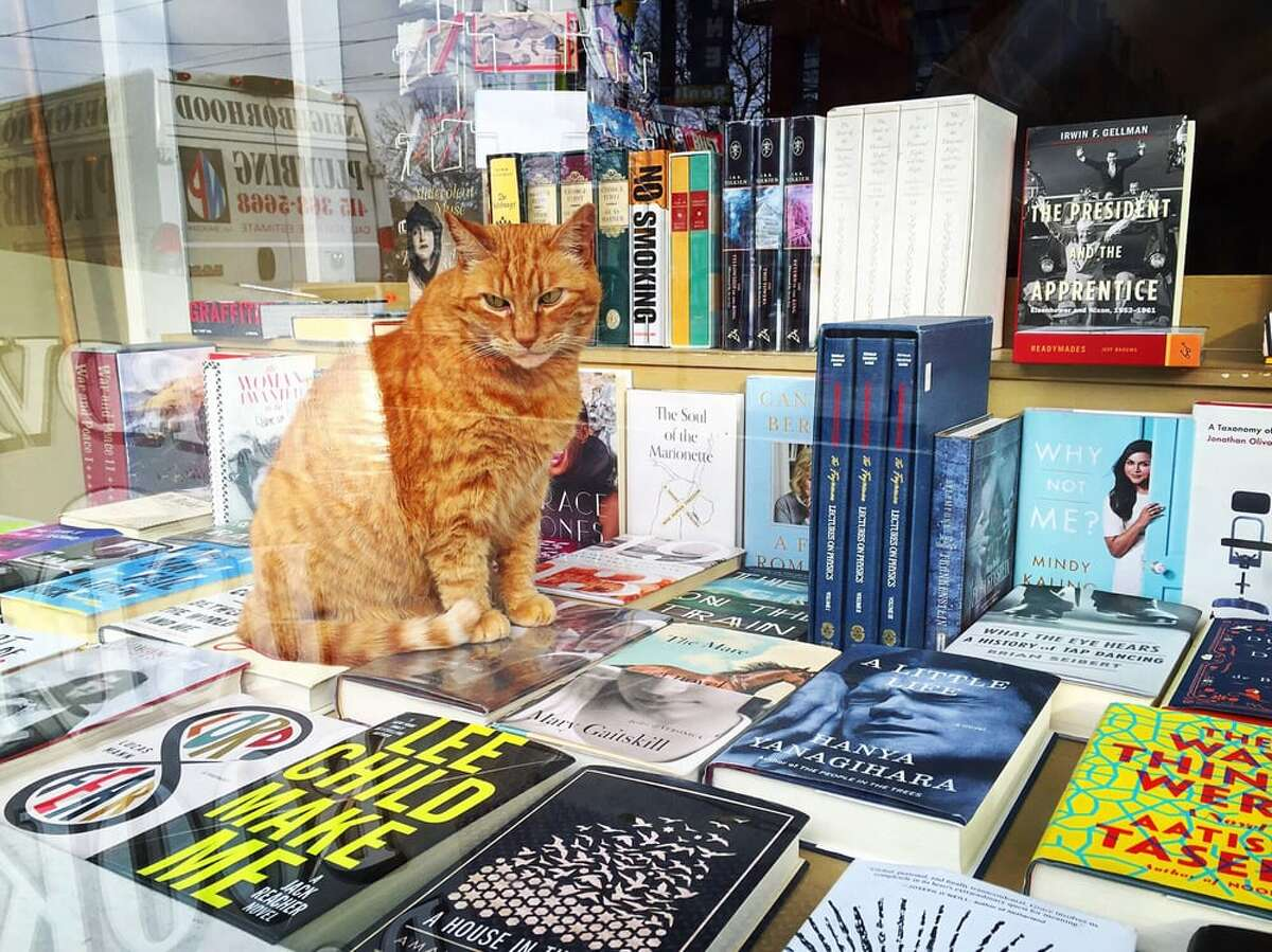 Owen sits in the bookstore's window.