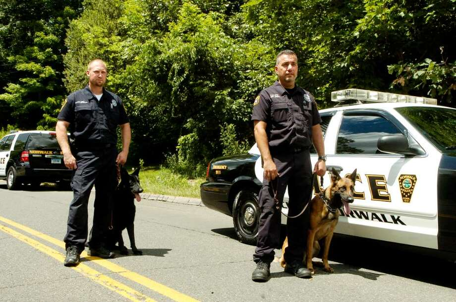"Norwalk, Conn. police K-9 officers  David Peterson and Black German Shepherd  ""Rainor"" and  Frank Reda and Belgium  Malinios ""Czar"", the two new police dogs who've been on the force for 6 weeks, on Grist Mill Rd on Thursday July 1, 2010. Photo: Dru Nadler / Stamford Advocate"