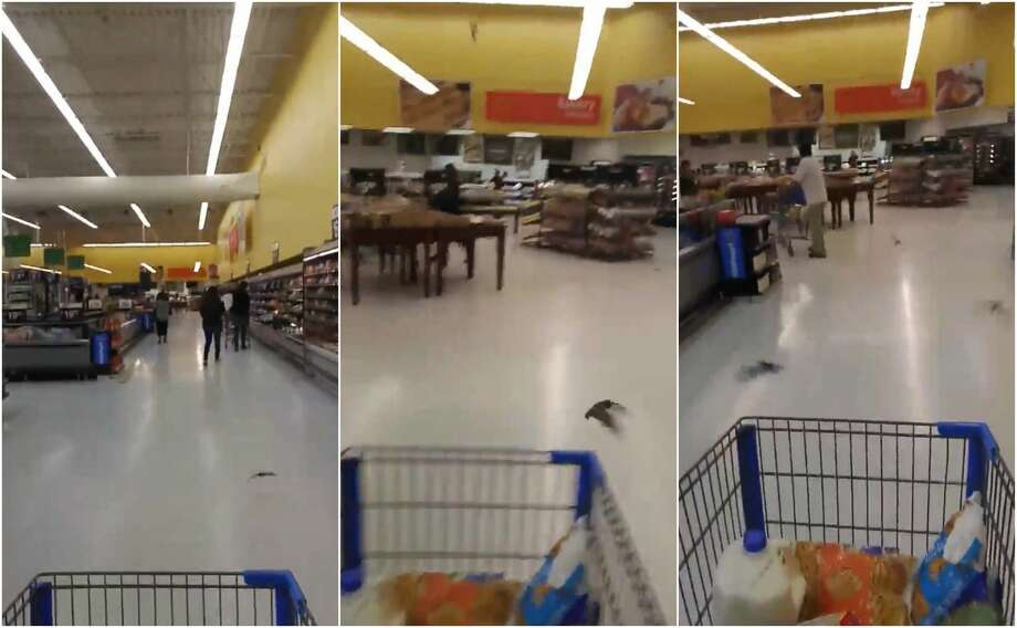 A Texas man was doing some dinner shopping at a Walmart in Alvin when he found himself surrounded by bats. Photo: Jerry Lattermann