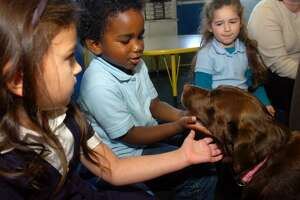 Preschool students Ava Smtih, Lance Toure and Natalia DiScalla greet Kenzie, a trained therapy dog during one of their classes at Skane School, in Bridgeport, Conn. Nov. 7th, 2011. Kenzie joins her owner, Christine Patella, who visits the school to read to students.