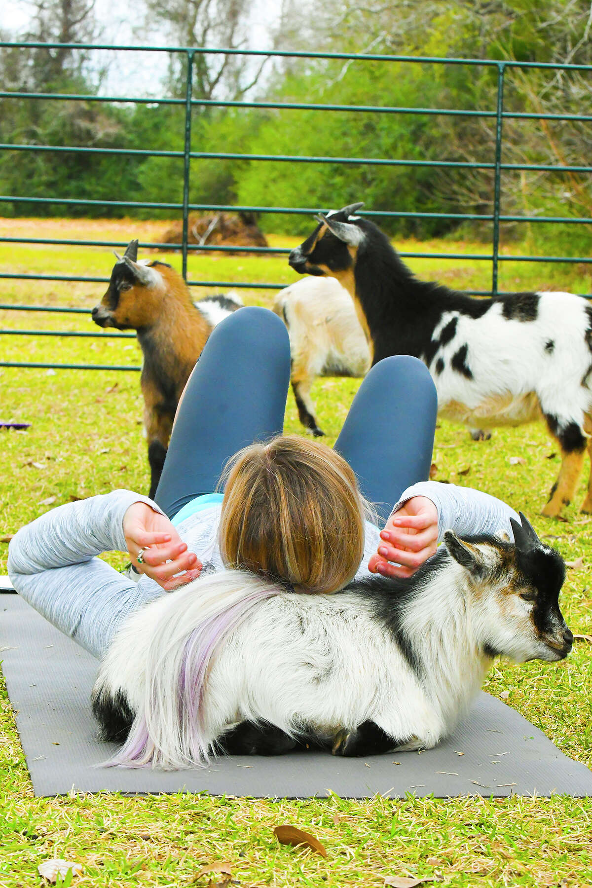 Kimberly Brooke, Goat Yoga Texas instructor, does a yoga routine with a goat behind her head.