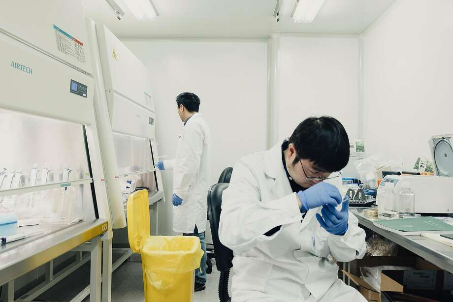 Researchers work at I-Mab Biopharma in Shanghai, one of the Chinese pharmaceutical companies trying to break into the U.S. market with their new treatments. Photo: YUHANG LIU, NYT