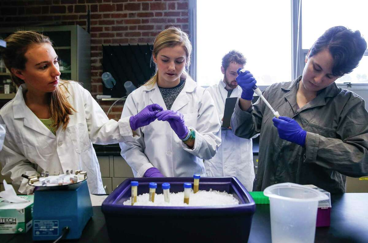 Rice students Lauren Howe-Kerr, left, Anna Knochel and Jordan Sims test coral samples taken from the Gulf of Mexico to study the health of reefs. (Michael Ciaglo/Houston Chronicle via AP)