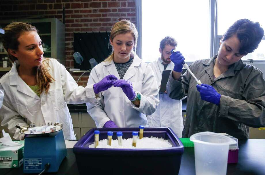 Rice students Lauren Howe-Kerr, left, Anna Knochel and Jordan Sims test coral samples taken from the Gulf of Mexico to study the health of reefs.  (Michael Ciaglo/Houston Chronicle via AP) Photo: Michael Ciaglo, MBO / Michael Ciaglo