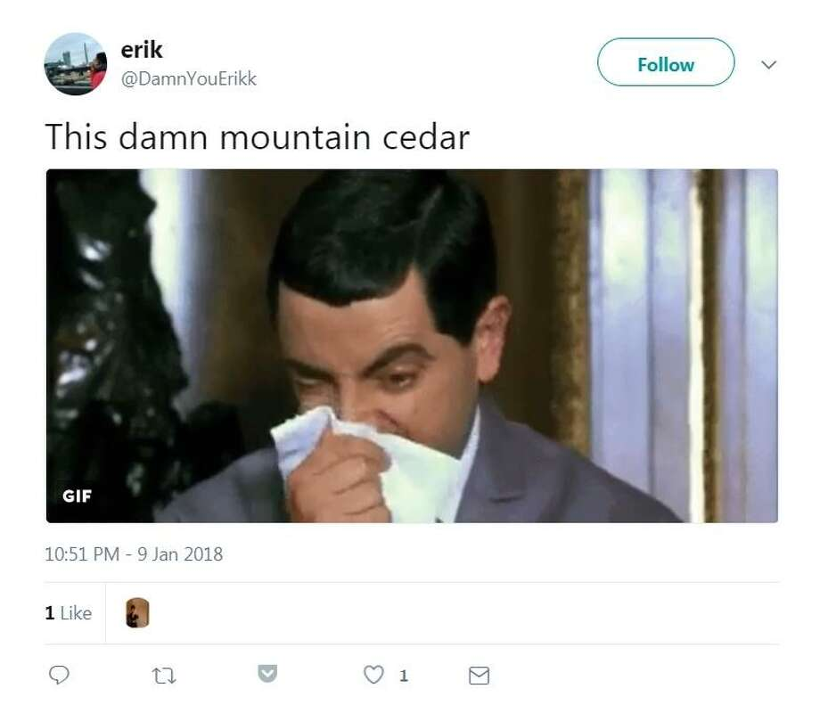 @DamnYouErikk: This damn mountain cedar Photo: Screenshot