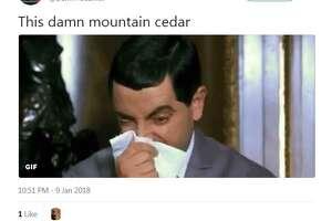 @DamnYouErikk: This damn mountain cedar