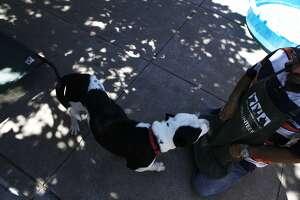 Steven Carmel, a volunteer at the Oakland Animal Shelter, plays with a dog at the Oakland Animal Shelter on July 29, 2015.