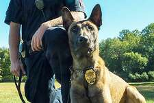 """Brookfield Police Sgt. Jeff Osuch and his K9 partner Argo. The Belgian Malinois police dog will be getting a protective vest thanks to a charitable donation from the nonprofit organization Vested Interest in K9s, Inc. K9 Argo's vest is sponsored by a fundraiser hosted by Protectors of Animals of East Hartford. It will be embroidered with the sentiment """"This gift of protection provided by Protectors of Animals."""" Argo was purchased through a donation a $12,500 donation from longtime Brookfield residents Warren and Ruth Malkin."""