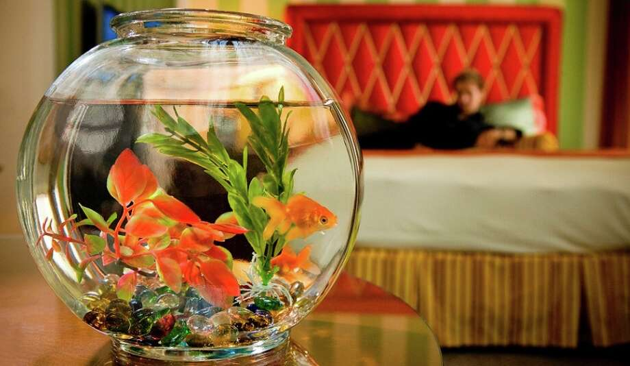 PETA says goldfish get depressed in fishbowls. But they made Kimpton hotel guests happy! Photo: Kimpton Hotels