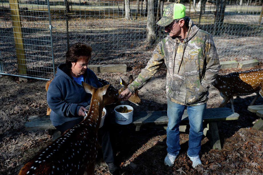 Phyllis and Derrile LeBlanc feed treats to a group of axis deer at Triple L Whitetails and Exotics near Vidor. The couple has over 50 deer on their small farm.  Photo taken Friday 12/29/17 Ryan Pelham/The Enterprise Photo: Ryan Pelham / ©2017 The Beaumont Enterprise/Ryan Pelham