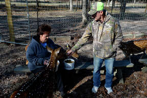 Phyllis and Derrile LeBlanc feed treats to a group of axis deer at Triple L Whitetails and Exotics near Vidor. The couple has over 50 deer on their small farm.  Photo taken Friday 12/29/17 Ryan Pelham/The Enterprise