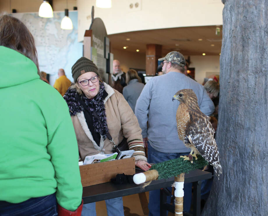 The Alton Regional Convention & Visitors Bureau kicked off eagle viewing season with the Alton-Audubon Eagle Festival on Saturday, Jan. 6, 2018 at the Audubon Center at Riverlands as well as in Downtown Alton. The festival announced the start of the eagle watching season with eagle activities, an Ice Block Party, an eagle greet and meet and more. Eagle Meet and Greets will be conducted every Saturday through January at the Alton Visitor Center, 200 East Piasa St., from 10 a.m. to 2 p.m. The photo at upper right shows a red shouldered hawk at Riverlands Center. Other photos show children enjoying crafts and activities at the Riverlands Center and using telescopes to view wildlife. Photo: Marci Winters-McLaughlin • For The Intelligencer