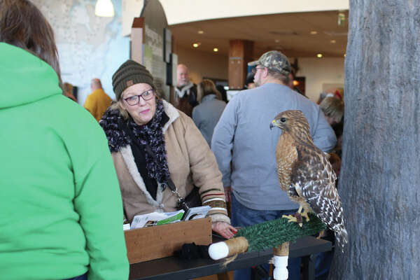The Alton Regional Convention & Visitors Bureau kicked off eagle viewing season with the Alton-Audubon Eagle Festival on Saturday, Jan. 6, 2018 at the Audubon Center at Riverlands as well as in Downtown Alton. The festival announced the start of the eagle watching season with eagle activities, an Ice Block Party, an eagle greet and meet and more. Eagle Meet and Greets will be conducted every Saturday through January at the Alton Visitor Center, 200 East Piasa St., from 10 a.m. to 2 p.m. The photo at upper right shows a red shouldered hawk at Riverlands Center. Other photos show children enjoying crafts and activities at the Riverlands Center and using telescopes to view wildlife.