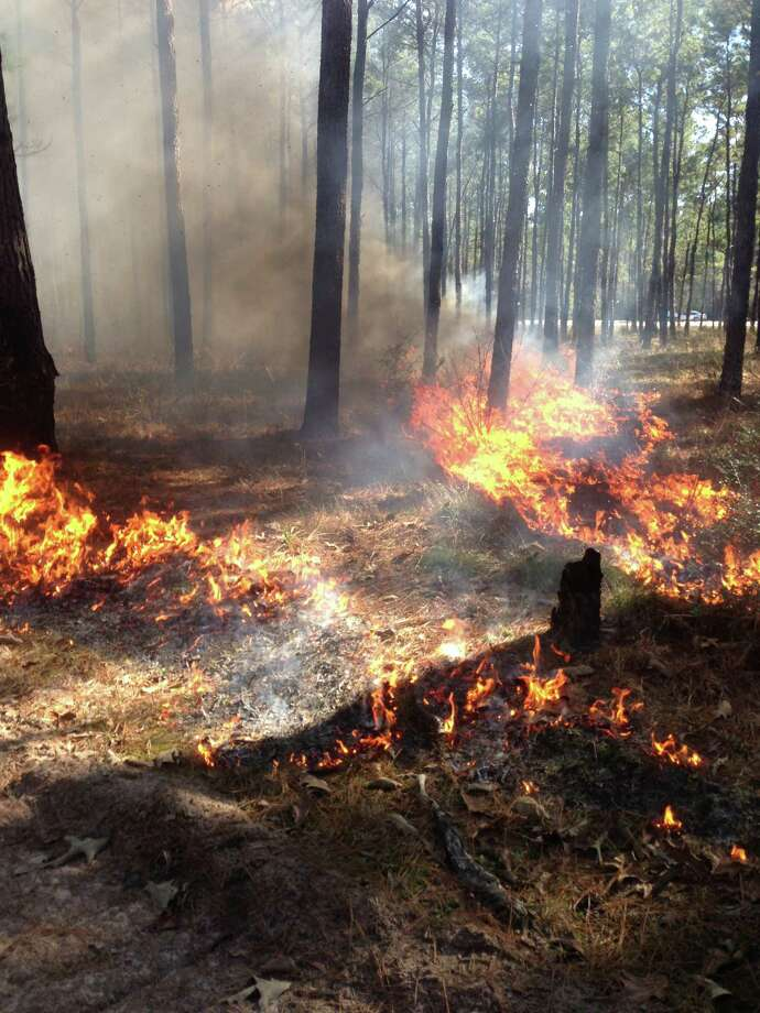 "Flames and smoke from a ""prescribed burn.""  Officials at Jones State Forest plan such fire as soon as weather conditions are just right. Photo: Handout, Courtesy Of Jones State Forest"