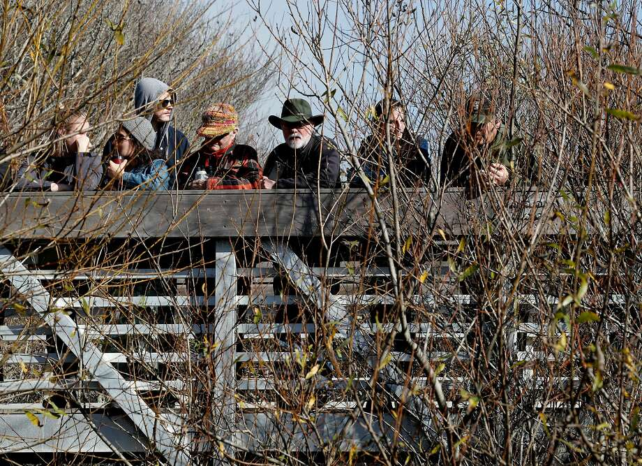 People gathered on the bridge above to watch as nearly 200 adult Coho Salmon are released into Marin County's Redwood Creek to boost spawning of the endangered fish, at Muir Beach, on Friday, Jan. 12, 2018 in Mill Valley, Calif.. Photo: Michael Macor, The Chronicle